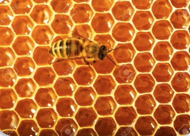 Bal Arısı Matematik mi Biliyor? / Bal Peteğinin Yapısı