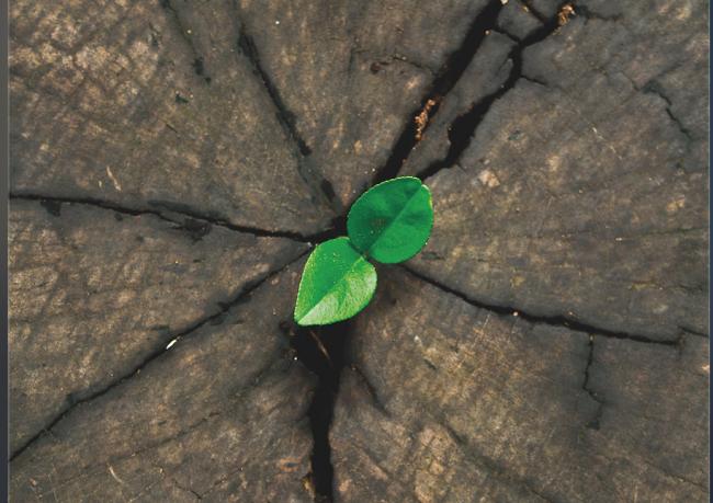 Bir Ömrün Değişmez Prensibi: Müspet Hareket