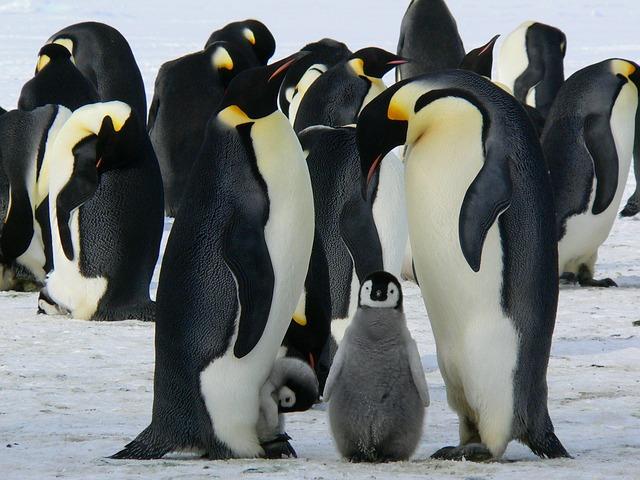 Soğuk Yerlerin Sıcak Dostları: Penguenler