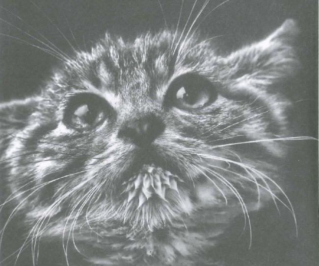 Bir Kedinin Son İsteği