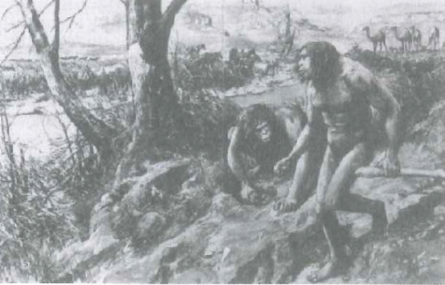 Hesperopithecus Haroldcooki