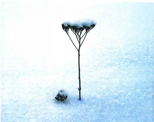 Kar Yağar Çiçek Çiçek