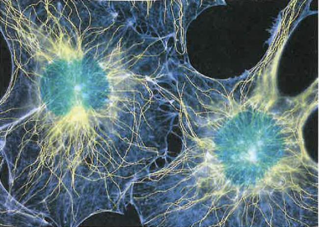 Hücrelerin De İskelet Benzeri Bir Yapıları Var!