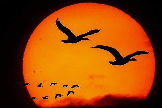 Kuşların Gizemli Yolculuğu Göçler