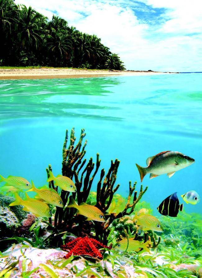 Deniz Kimin İse, Balıklar Da Onundur