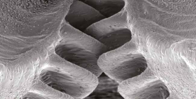 Böceklerdeki Harika Mekanizmalar
