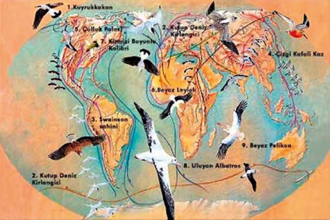 Göçmen Kuşlar Ne Anlatır?
