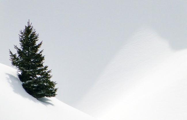 Bitkiler Kışa Hazırlık Yaparlar Mı?