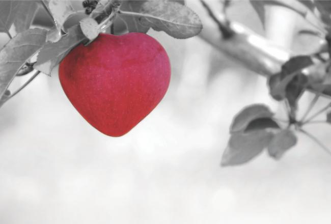 İnsan Meyvesi