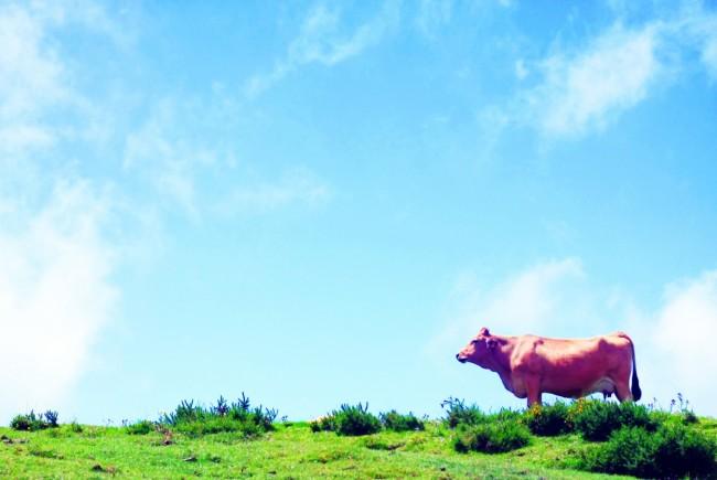 Kurban Eti Tüketiminde Gözümüzden Kaçanlar