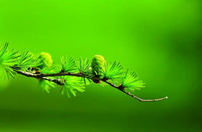 Allah Bilir, Yaratır ve Korur / Hıfzetme Fiili