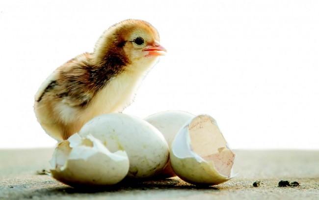 Bir Yumurtadan Her şey Okunur