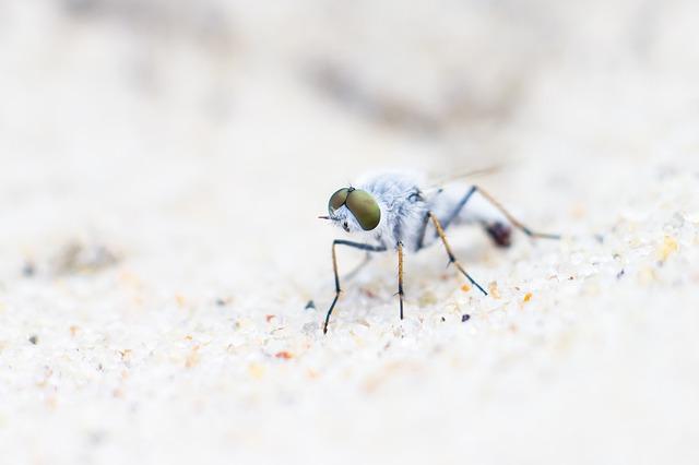 Kum Sinekleri Mikrocerrahi Uzmanı Mı?