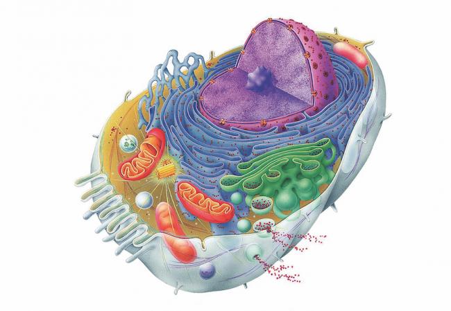 Hücre Duvarı Bilim Dünyasını Şaşırtıyor