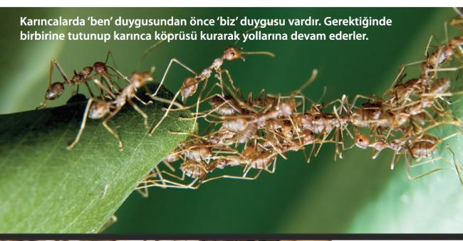 Karınca Küçük Görevi Büyük