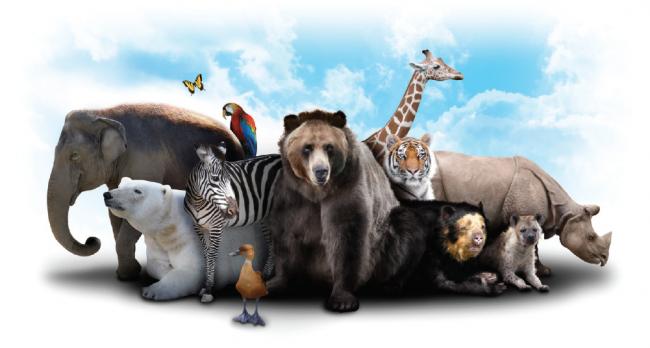 İnsana Faydası Olmayan Bazı Hayvanlar Gereksiz mi?