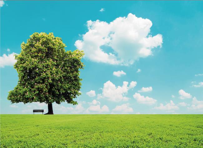 Kültürümüzde Ağaç ve Çınar