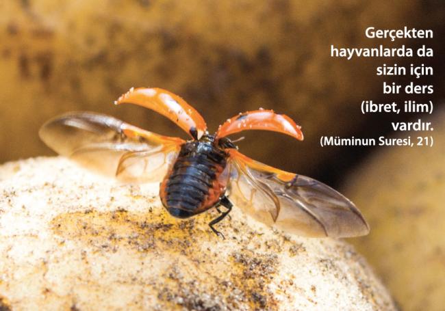 Bilim Uğur Böceğinin Peşinde