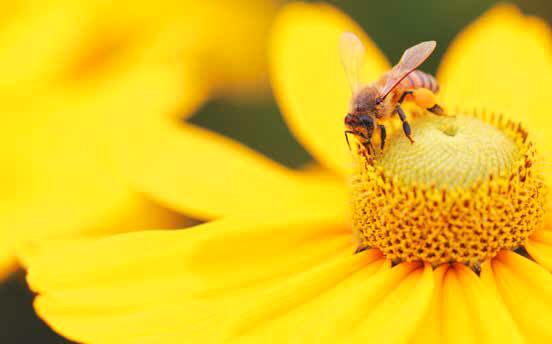 Bir bal arısı yapmak