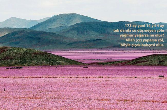 Çöl, nasıl çiçek tarlası oldu?
