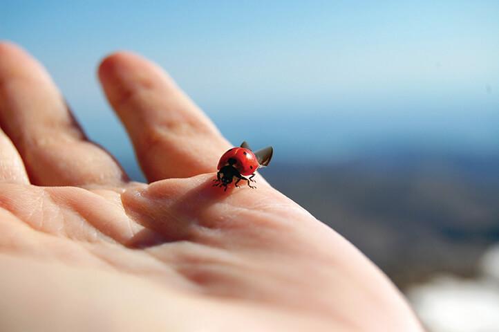 Uçuç böceği