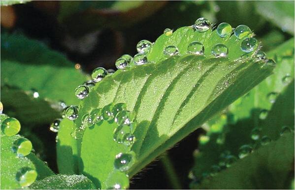 Bitkilerin İklime Etkisi