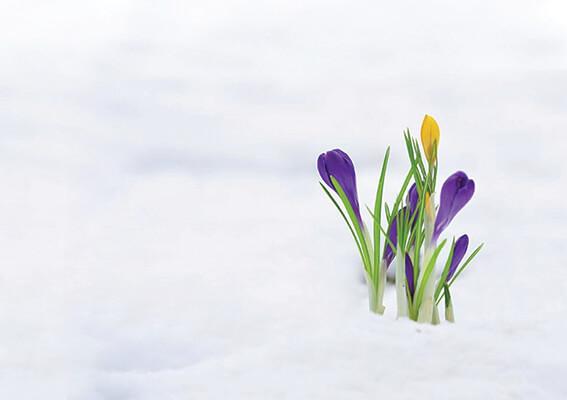 Kar yağıyorsa, bahar yakındır