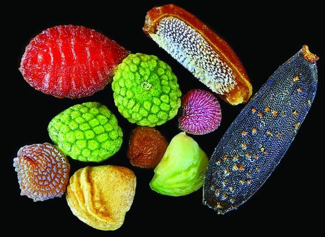 Süslü Tohumlar / Tohum Kabuğundaki Harika Tasarım?