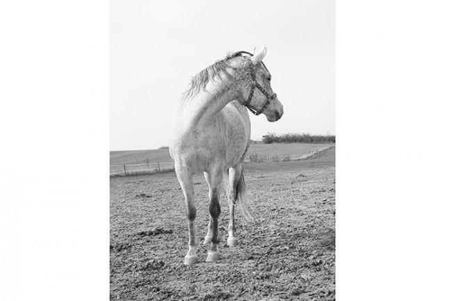 Dedem ve Kır Atı