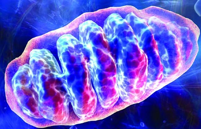 Her Hücremizde Çevreci Enerji Santralleri mi Var?