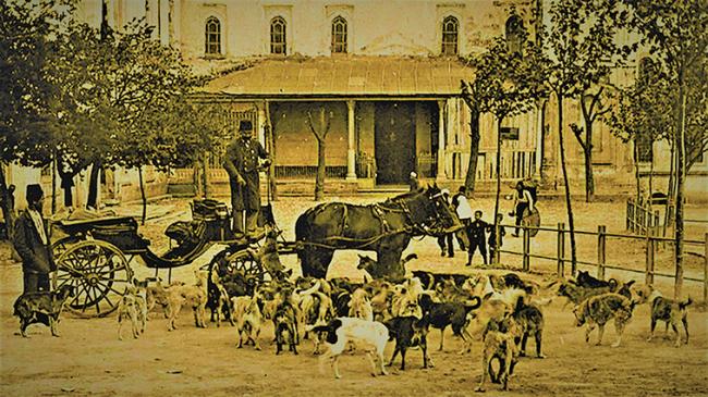 Dünyada Hayvan Haklarını İlk Defa Osmanlı Düzenledi