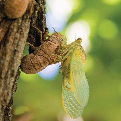 Masal Sevmeyen Böcek