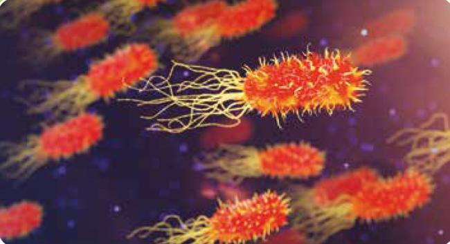 Bakteriler Yardımlaşıyor: Biyogaz Üretimi
