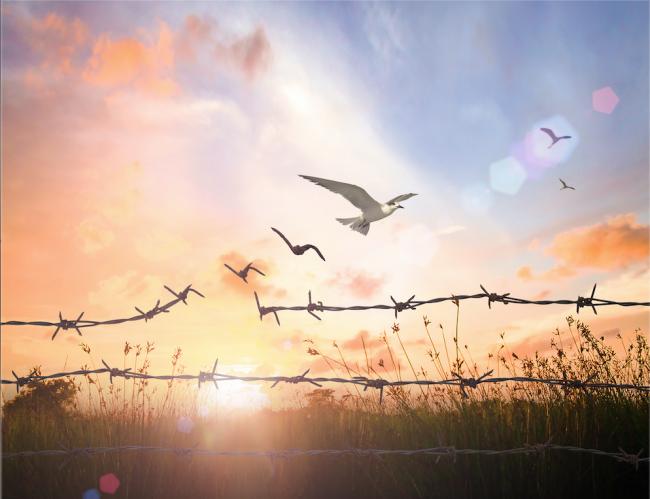 Bir Özgürlük Çağrısı: Sade Hayat