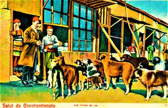 Osmanlı Zamanının Mutlu Hayvanları