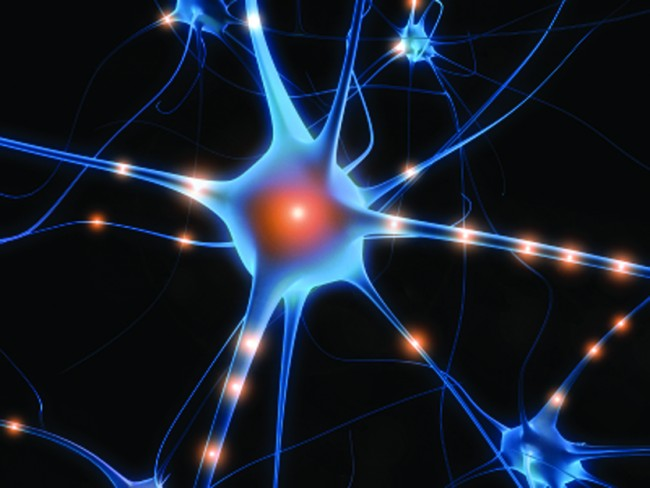 Beyindeki Karmaşık Ama Mükemmel İletim Sistemi