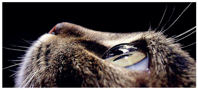 Parlayan Gözler / Hayvanlarda Gece Görüş Kamerası