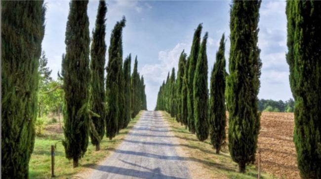 Konuşan Ağaçlar / Mezarlıklara Neden Selvi Dikilir?