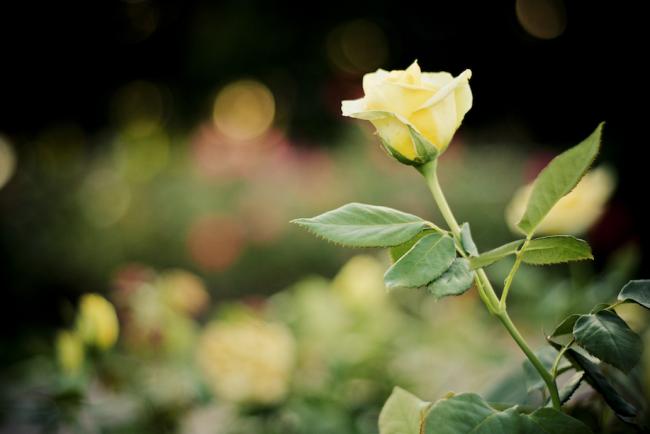 Sevgiliyi Hatırlatan Şey de Sevilirmiş