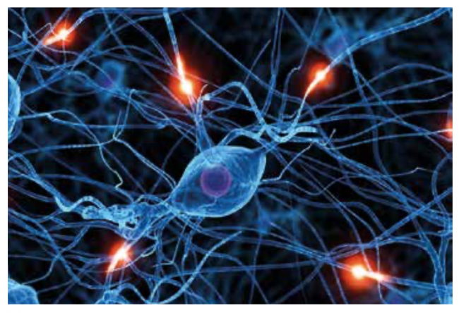 Beynimizin Şaşırtan ve Yeni Anlaşılan Esnekliği: Nöroplastisite
