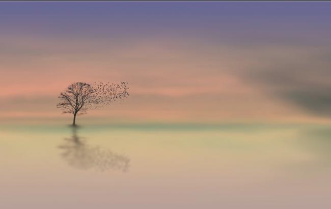 Duha: Sessizliğin Kalbi