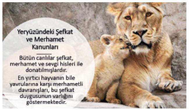 Canlılar Âleminin Şefkat Kahramanları Anneler