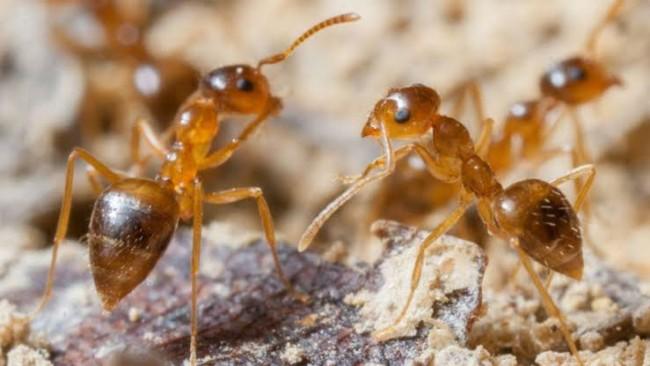 """""""Sosyal Mesafe Kuralı""""nı Arı ve Karıncalardan Öğrenelim"""