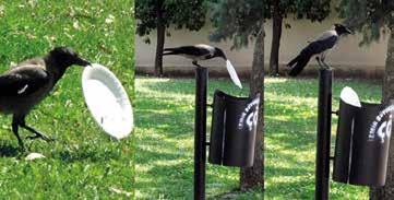 Kargalar Çöp Topluyor / Zararlı Kimyasallar Yerine Hayvanlar Kullanılabilir