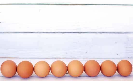 Yumurtanın Hikâyesi