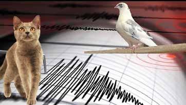 Depremi Önceden Tahmin Etmede Hayvan ve Bitkiler Kullanılabilir mi?