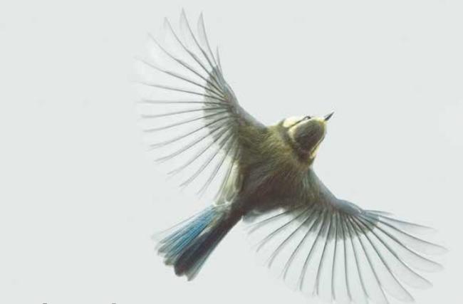 Uçak Yapılıyor, Peki Kuş Tesadüfen mi Oluyor?
